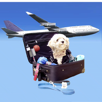 Pet transport copy